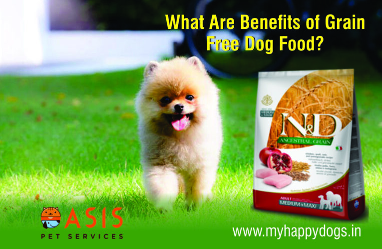 What Are Benefits Of Grain Free Dog Food?
